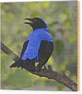 Irena Puella Asian Fairy Bluebird Wood Print