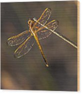 Iridescent Dragonfly Wings Wood Print