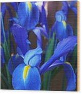 Iris 2 Wood Print