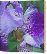 Iris 30 Wood Print