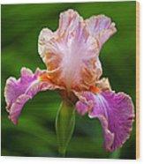 Iris 5 Wood Print