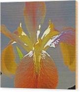 Iris 62 Wood Print