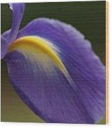 Iris 7 Wood Print