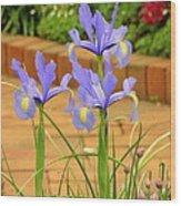 Iris Along The Walk Wood Print