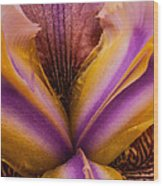 Iris And Gold Dust Wood Print