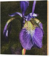 Iris Baroque Wood Print