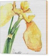 Iris Blooms  Wood Print by Sherry Harradence