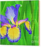 Iris Blossom Wood Print