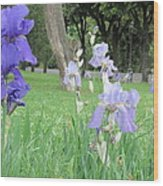 Iris Blues Wood Print