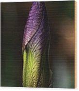 Iris Bud Wood Print