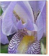 Iris Close Up 3 Wood Print