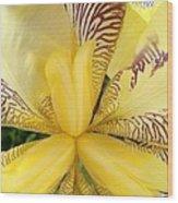 Iris Close Up Wood Print
