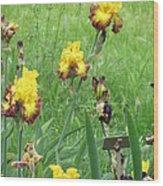 Iris Dancers Wood Print