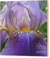 Iris Dancing In The Spring Wood Print