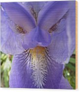 Iris Face Wood Print