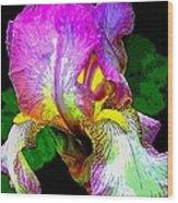 Iris Flashy Splash Of Color Wood Print