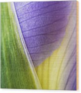 Iris Flower Close Up Wood Print by Natalie Kinnear