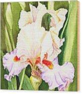 Iris Flower Dancing Petals Wood Print