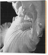 Iris Flower In Black And White Wood Print