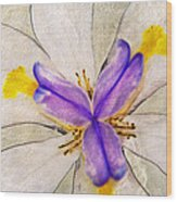 Lily Flower Macro Photography Wood Print