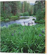 Iris Flowers By The Metolius River Wood Print