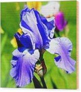 Iris In Bloom Wood Print
