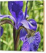 Iris In Grass Wood Print