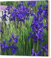 Iris In The Field Wood Print