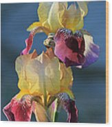 Iris In The Morning Wood Print