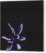 Iris In The Sky Wood Print