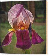 Iris In The Spotlight Wood Print
