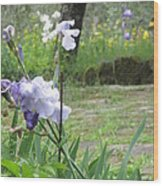 Iris On The Path Wood Print