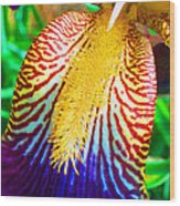 Iris Petal By Jan Marvin Wood Print