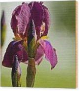 Iris Pictures 117 Wood Print