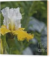 Iris Pictures 169 Wood Print