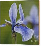Iris Pictures 185 Wood Print