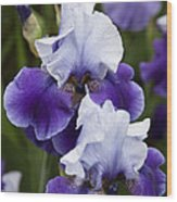 Iris Purple And White Fine Art Floral Photography Print As A Gift Wood Print