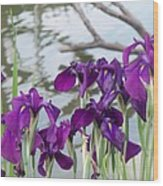 Iris Purple Lavender Wood Print