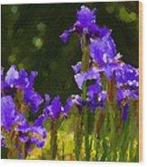 Iris Radiance Wood Print