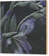 Iris Rain Wood Print