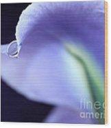 Iris Tear Of Joy Wood Print