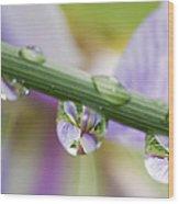 Iris Versicolor Reflection Wood Print