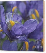 Iris With Raindrops Wood Print