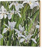 Irises Dancing In The Sun Painted Wood Print