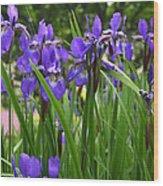 Irises In Spring Wood Print
