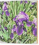 Irises In The Garden Wood Print