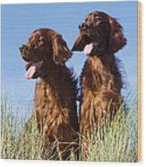 Irish Red Setter Dog Wood Print