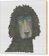 Irish Water Spaniel Wood Print