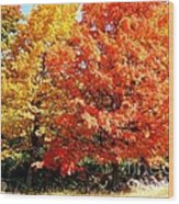 Is Autumn Already Wood Print