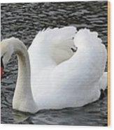Isar Swan Wood Print